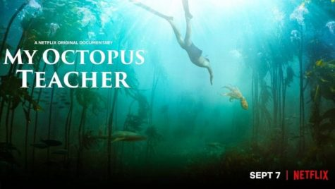 https://financerewind.com/entertainment/my-octopus-teacher-is-out-on-netflix-cast-plot-and-more/